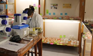 Fly breeding lab at the Charles Darwin Research Station in the Galapagos