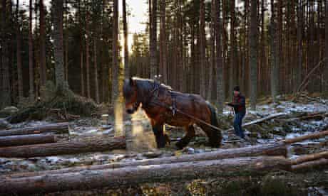 Horse Logging On The Balmoral Estate