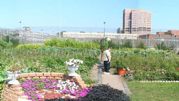 cook county jail garden