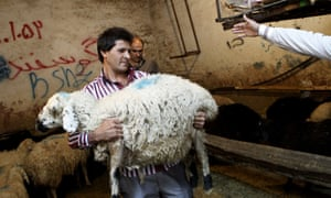 Sheep live export Iran