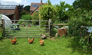 Live Better: Chickens