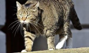 Chancellor George Osborne's cat Freya