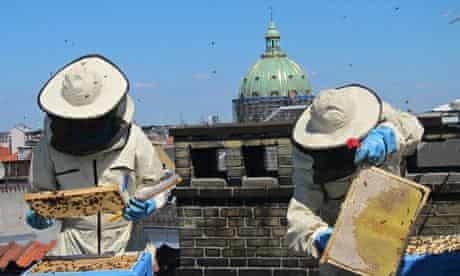 Bybi bees