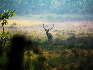 Nepal's Chitwan National Park
