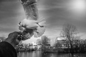 Gulls, Barnes, London