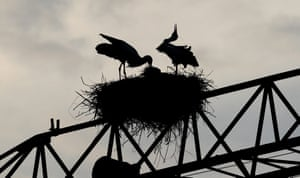 Storks nest on a disused crane in Kirchheim, Germany.