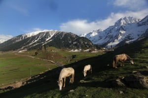 Horses graze in the Sonmarg valley on an autumn morning with the snow-covered Himalayan mountain range in the background in Srinagar.