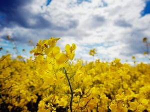 An Australian farmer has lost a court case against his neighbour and former friend who's GM canola crop spread to his property, losing him his organic status.
