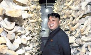 North Korean leader Kim Jong-un tours a mushroom factory affiliated with North Korea's military unit 534.