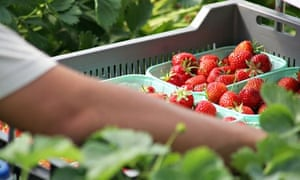 The Co-op Farms strawberries