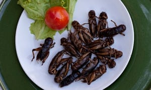 Plate of Edible Fried Insects Thailand