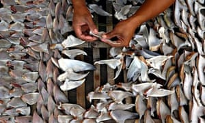 Sharks trading in Indramayu
