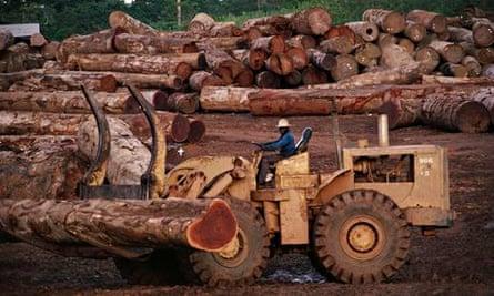 Lumberyard Worker Moving Logs in Africa