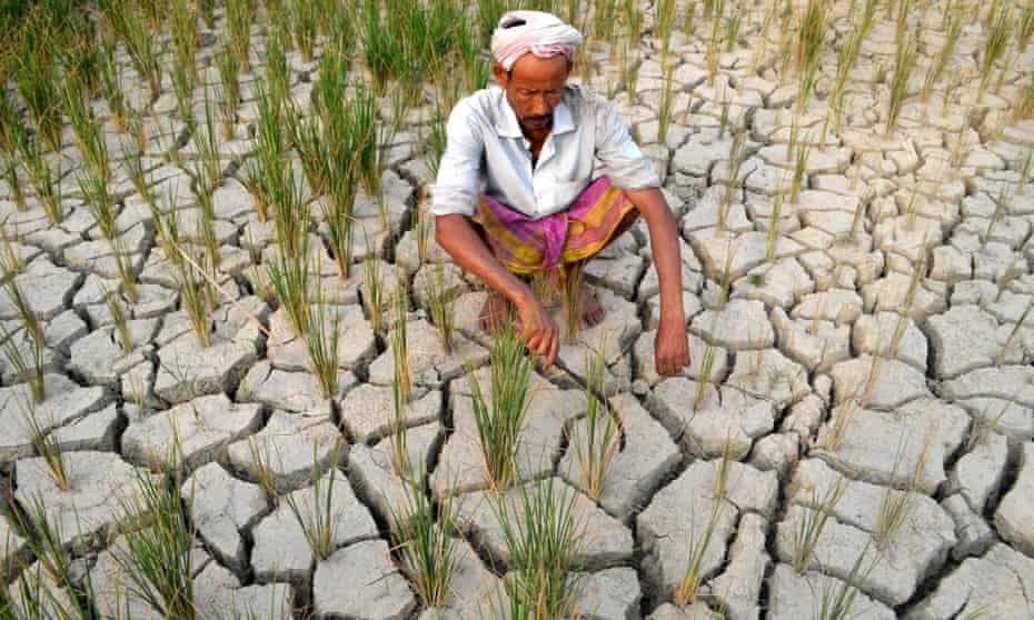 A farmer waits for rain on his drought hit paddy field in Morigoan, around 60 km away from Guwahati, the capital city of Indias northeastern state of Assam, 01 May2014.