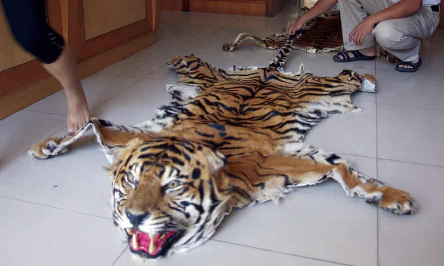 Wildleak website to fight wildlife trade : Tiger skins openly on sale at a retail outlet in Mong La, Myanmar