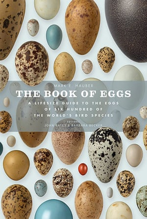 Book of Eggs: Book of Eggs by John Weinstein