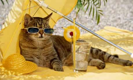 tabby cat - with sun glasses under sun shade
