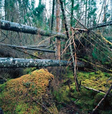 Jackstraw: a tangle of trees.