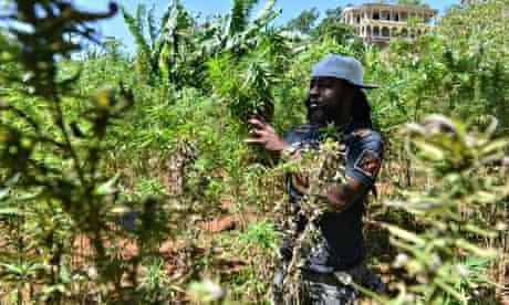 Breezy marijuana farmer