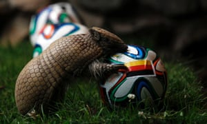 An armadillo called Norman, approaches the ball representing Germany as he makes his prediction for the team's opening World Cup match against Portugal. He got it right as Germany triumphed 4-0.