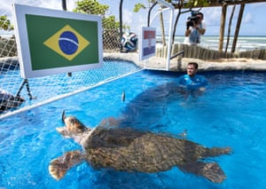 Over in Praia do Forte, Brazil they have a 30 year old turtle named Cabecao or Big Head, predicting Brazil's results. He got the first one right when Brazil won 3-1 but he plumped for Mexico in the second game which ended 0-0.
