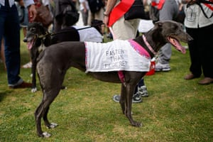 wimbledon day one: A dog from a greyhound charity shelter at Wimbledon
