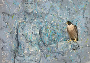 Peregrine Falcon from Emma Hack's 'Birds of a Feather' collection