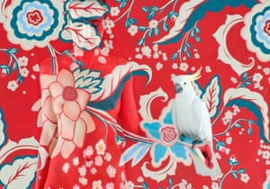 Vreeland's Cockatoo from Emma Hack's 'Birds of a Feather' collection