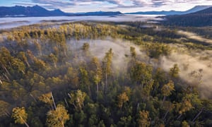 World Heritage forest in Tasmania.