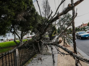 A tree is down after wild weather in Melbourne on Tuesday