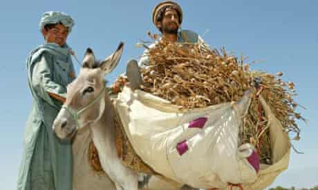 Afghan farmers with opium crop
