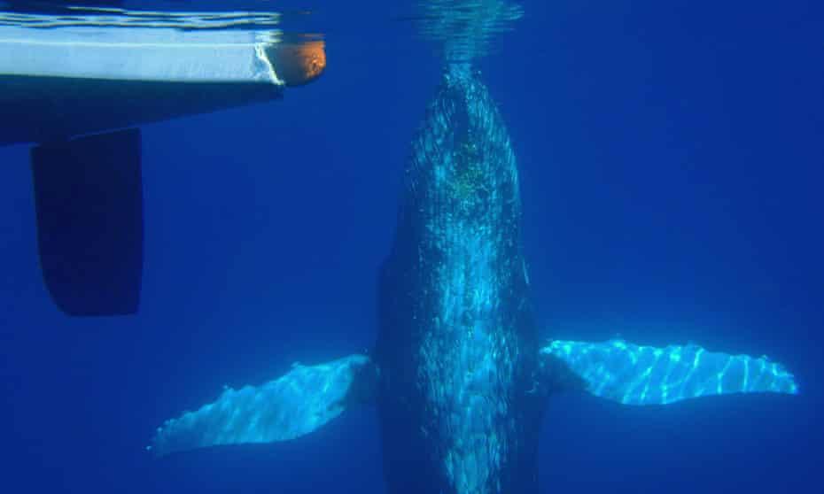 whale boats