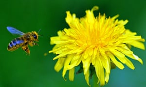 A report released this week likened the decline of pollinators caused by neonicontinoids to the ecosystem degradation from DDT in Rachel Carson's Silent Spring.