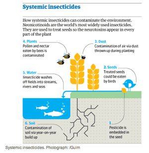 Systemic insecticides