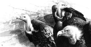 2014 David Shepherd Wildlife Foundation (DSWF) Wildlife Artist of the Year The David Shepherd Choice – the piece chosen by David Shepherd CBE as his favourite in the competition  Winner: Vulture Club by Martin Buffery (Oxhill Warwickshire)