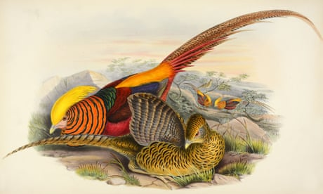 Image result for gould's birds of australia