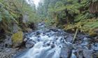 """Wilderness rainforest in the southern Tarkine"""