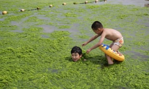 Green beach - Children playing with algae in Qingdao, east China's Shandong province as another round of algae growth hit the waters off the city