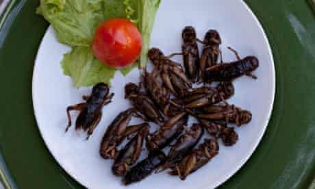 A plateful of crisp crickets with a tomato and lettuce