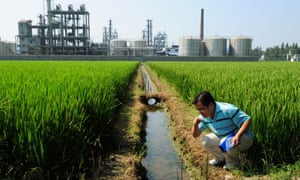 Chinese environmental activist Wu Lihong at an irrigation channel outside a chemical factory beside a rice paddy and on the edge of Taihu Lake in Yixing in Jiangsu Province.