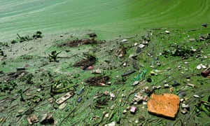Toxic green scum and brown foam float on Taihu Lake near Yixing in Jiangsu Province.