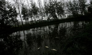 Dead fish float in a pond in Yancheng of Jiangsu Province