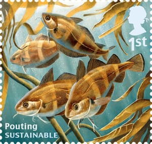 Undated handout photo issued by Royal Mail from their Sustainable Fish Special Stamps issue showing Pouting.