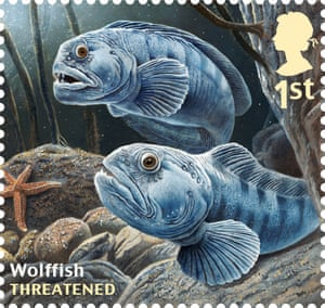 Undated handout photo issued by Royal Mail from their Sustainable Fish Special Stamps issue showing Wolffish.