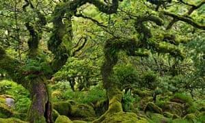 Wistman's Wood: the most beautiful lichen in Britain.