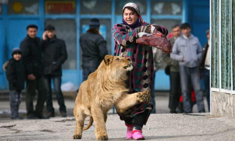 Zoo keeper Zukhro walks with Vadik, an 18-month-old male lion, at the Dushanbe zoo in 2011.