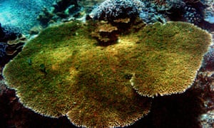 A large coral is seen underwater in Nusa Penida on the Indonesian resort island of Bali. The area is known as the Coral Triangle, and stretching across six nations between Indian oceans: Indonesia, Malaysia, the Philippines, East Timor, Papue New Guinea and the Solomon Islands.