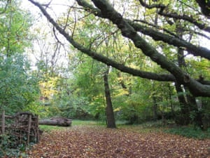 Barnsbury Wood is London's smallest nature reserve. It's used by schools for environmental education sessions, bu due to it's small and vulnerable nature is usually only open to the public one afternoon a week