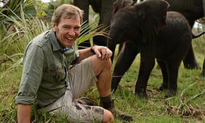 Mark Evans and 100kg of adorable baby elephant in Born in the Wild. Photograph: Pro Co/Windfall Film