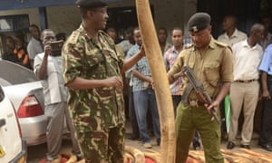 Police with huge elephant tusk seized in Mombasa